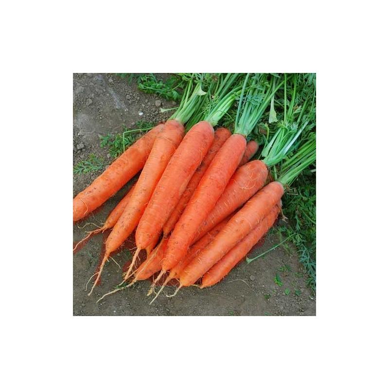 Семена моркови продать